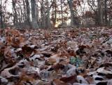 Sunrise through the Leaves.jpg