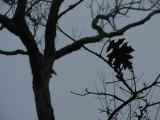 The Lone Leaf.jpg