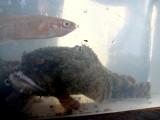 Toad Fish.jpg
