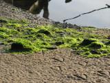 Green Stuff.jpg