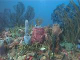 Coral and Sponge Scene