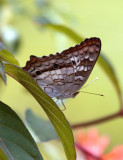 Butterfly on Leaf.jpg