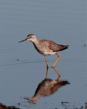 Circle B Lesser Yellow Legs on Wading Bird Way.jpg