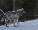 Nymph Lake Wolf Crossing Road.jpg