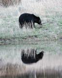 Black Bear Reflection at Phantom Lake.jpg