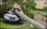 The Day After Katrina