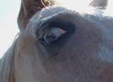 Horse of a Different Color  - This guy had blue eyes!!