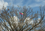 First Kite Fatality of 2009