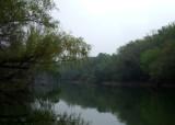Last Bits of Fog on the Navidad River