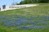Bluebonnets Along Hwy 290