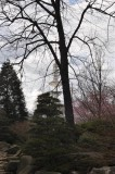 Tree-nature versus man