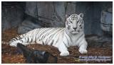 Lowry Park Zoo 16x9