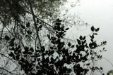 Bloedel Reserve, Bainbridge Island, WA