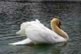 Swan Lake, Penn's Caves, PA