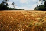 wind-blown-fields01.jpg