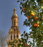 Seville Oranges 72.jpg