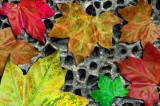 Leaf-montage.jpg