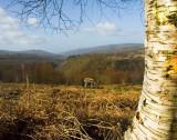 Brecon-walk.jpg