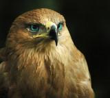 Birdie-Blue-eyes.jpg
