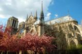 Notre-Dame-blossom.jpg