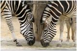 A day at Taronga Zoo