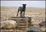 Beware of this !! A Zoombie Watch-Dog - Fuerteventura Spain