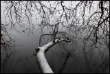 After snowfall comes....... rain!  Lake Kastoria