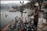 Feeding pigeons in the harbour of Kastoria