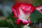 garden_2010