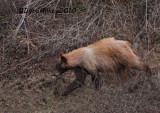 Bear Photos From NW Colorado