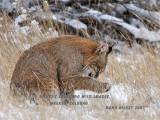 Bobcat 7581.jpg