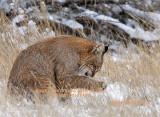 Bobcat 7582.jpg