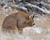 Bobcat 7583.jpg