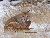 Bobcat 7662.jpg