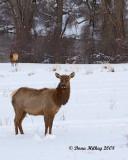 NW Colorado Deer, elk, pronghorns and moose