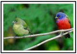 Painted Bunting Pair