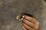 Two girls were knocking out butterflies. One would hit them with basket, the other picked them up.