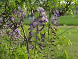 IMG_3179_ Little bit of purple ...
