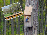 Bird and Bird House
