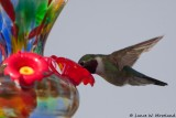 Feeding Humming Bird