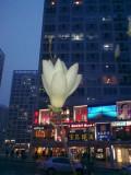 Apr-2-Flower
