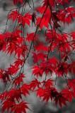 In a fall rain 6254