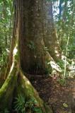 15 Along the jungle trail 0906w