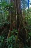 15 Along the jungle trail 0927a