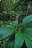 15 Along the jungle trail 0937