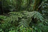 15 Along the jungle trail 0948