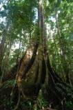 15 Along the jungle trail 0955
