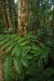 15 Along the jungle trail 1028
