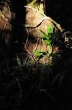 15 Rare light in the jungle 2571