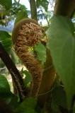 16 Tree fern 1174